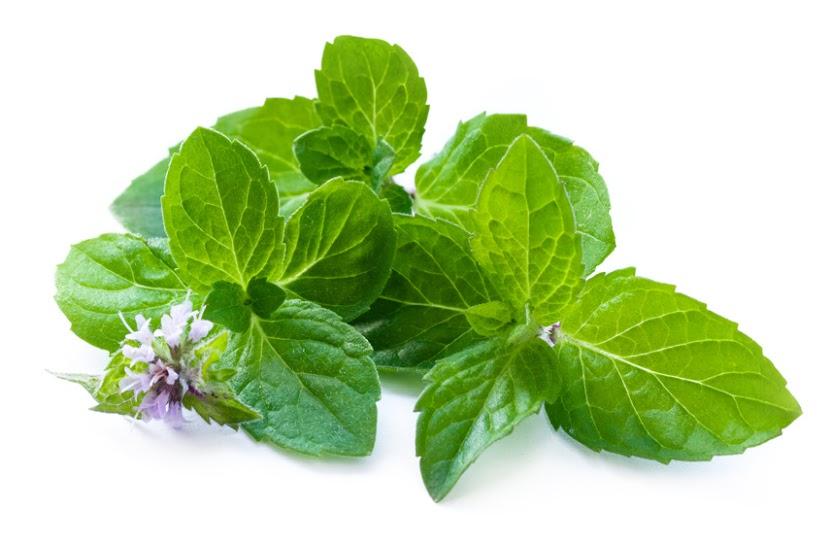Les meilleures plantes pour attirer les ondes positives