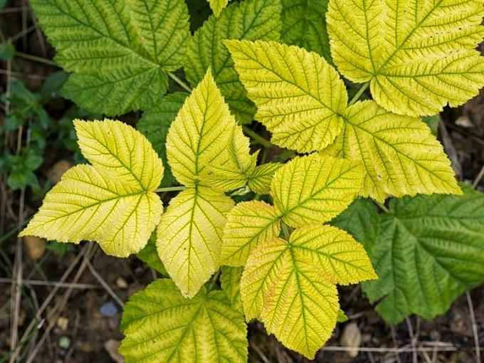 5 plantes médicinales faciles à trouver aux multiples vertus